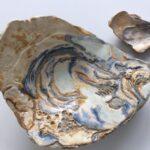 oesterschaal 22x17cmm